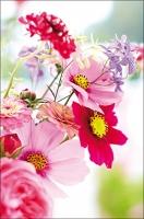Grußkarten Royal Fotogrußkarten ohne Text Blumentraum Multiset Set/30